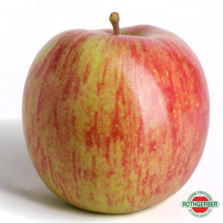 Pomme Fuji Ferme Rothgerber